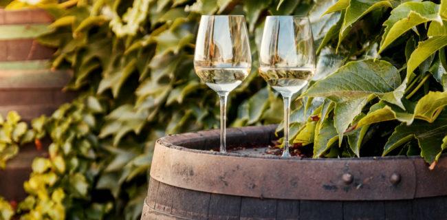 fattori che influenzano la qualità del vino