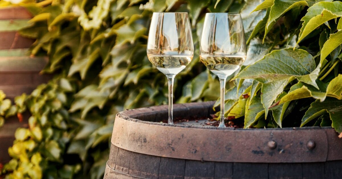 fattori che influenzano la qualita del vino