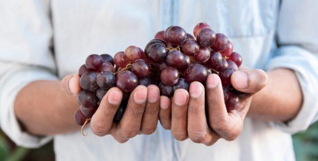 vitigni rossi più famosi